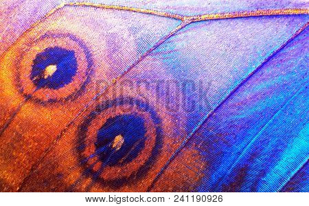Wing Of A Butterfly Morpho Texture Background. Morpho Butterfly. Extreme Macro.