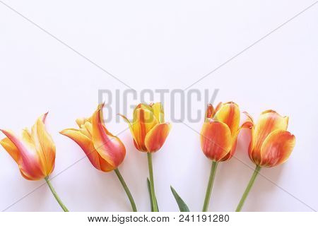 Styled Stock Photo. Spring Feminine Scene, Floral Composition. Bunch Of Beautiful Tulips On White Ba