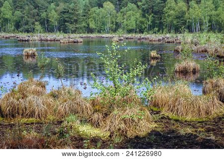 Marsh Of Protected Area Of Bug Landscape Park On The Bug River In Masovian Voivodeship Of Poland
