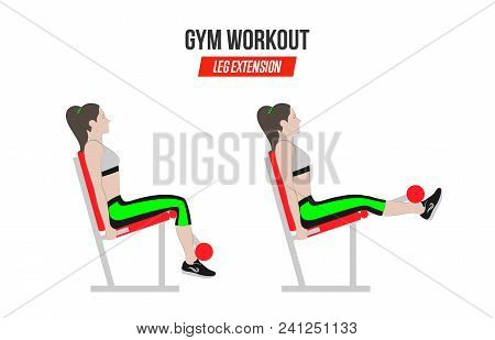 Leg Extension. Leg Extension In The Simulator. Sport Exercises. Exercises In A Gym. Illustration Of