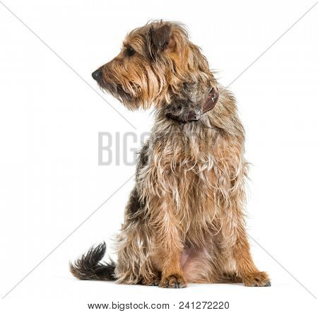 Mixed-breed dog looking away against white background