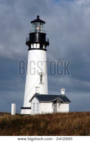Yaquina Head Lighthouse With Birds