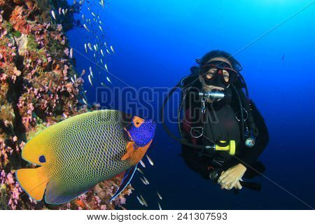 Scuba dive. Female scuba diver and Angelfish