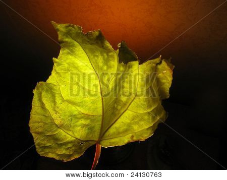Dry green leaf