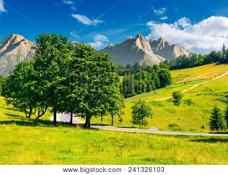 Trees By The Road In High Tatra Mountains. Composite Image Of Nature Scenery In Mountainous Area. Lo