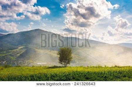 Lonely Tree On The Meadow In Smoke. Temnatyk Mountain In The Distance Under The Cloudy Afternoon Sky