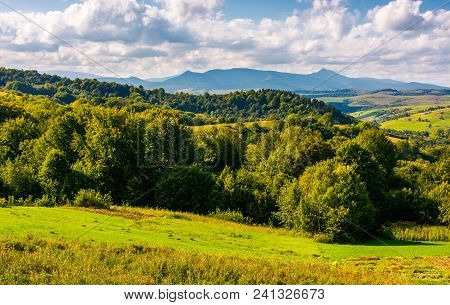 Forest On A Grassy Hill In Afternoon. Pikui Mountain In The Distance Under The Cloudy Afternoon Sky.