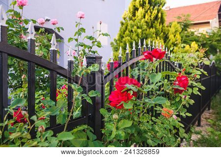 Black Iron Fence, Black Metal Fence And Roses
