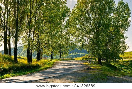 Trees By The Serpentine Road In Mountains. Beautiful Nature Scenery In Mountainous Area. Lovely Tran