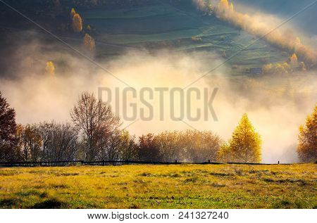 Row Of Trees On The Meadow In Morning Autumn Fog. Beautiful Background Of Forested Rolling Hill In T