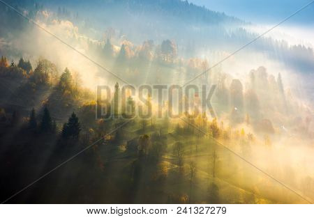 Fog Over The Forest In Morning Light. Beautiful Nature Background. Trees With Yellow Foliage On Roll