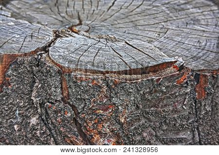 Tree Stump In The Forest.texture Background Of Stump.