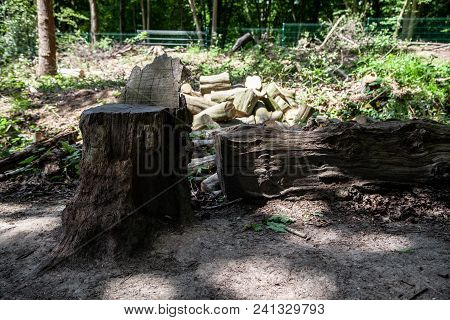 Tree Trunk Looks Like A Chair With Log Pile Behind