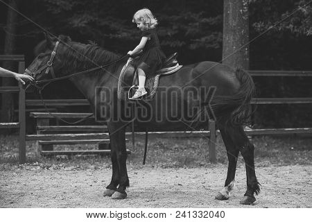Kids Playing - Happy Game. Girl Ride On Horse On Summer Day. Child Sit In Rider Saddle On Animal Bac