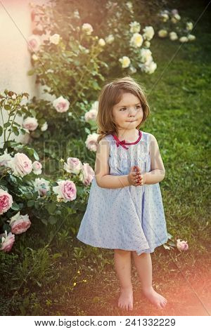 Happy Kid Having Fun. Childhood. Child Standing Barefoot At Blossoming Rose Flowers On Green Grass.