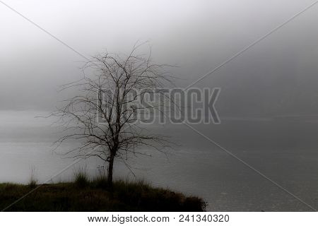 White Foggy Delta Solitary Tree On An Island Over Water In Winter