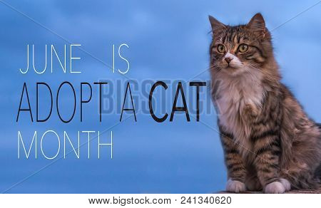 June Is Adopt A Cat Month, Background With Message And Adorable Kitty