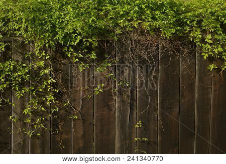 Wooden Fence With Plants As Background, Green Fence