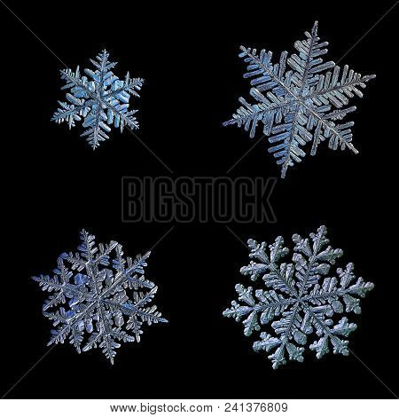 Four Snowflakes Isolated On Black Background. Set With Macro Photos Of Real Snow Crystals: Different