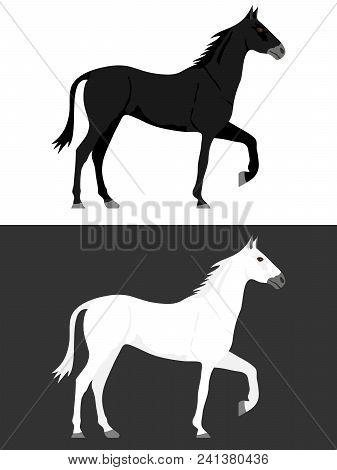 Horse, Black And White Horse. Two Horses. Flat Design, Vector Illustration, Vector.