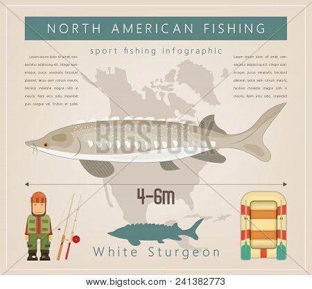White Sturgeon. North American Fishing Infographic Set. Freshwater Fish. Vector Illustration.