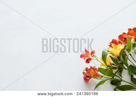 Colorful Alstroemeria On White Background. Flora Botany And Spring. Beautiful Flower Bouquet On Moth