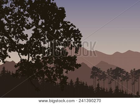 Vector Illustration With A Silhouette Of A Coniferous Forest With Mountains In The Background, Under
