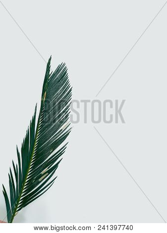 Fern Leaf On White Background. Decorative Natural Plant. Green Bracken Branch. Botany And Flora. Fre