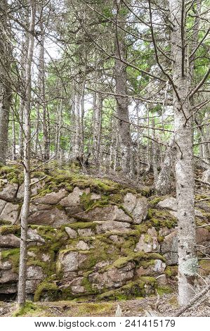 Mossy Rock Face Of Hillside In Acadia National Park