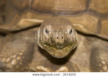 A Close Up Of A Tortoise