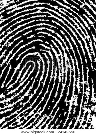 Black and White Vector Fingerprint Crop - Very accurately scanned and traced ( Vector is transparent so it can be overlaid on other images, vectors etc.)