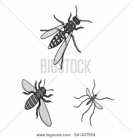 Different Kinds Of Insects Monochrome Icons In Set Collection For Design. Insect Arthropod Vector Is