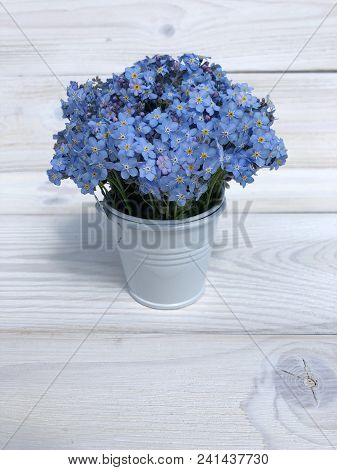 Forgetmenot Flowers In A Bucket On A Wooden Background