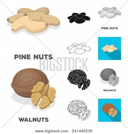Different Kinds Of Nuts Cartoon, Black, Flat, Monochrome, Outline Icons In Set Collection For Design