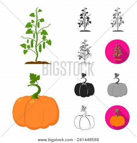 Plant, Vegetable Cartoon, Black, Flat, Monochrome, Outline Icons In Set Collection For Design. Garde