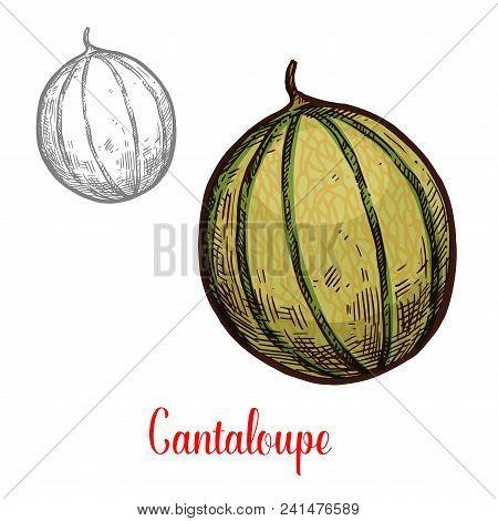 Cantaloupe Exotic Fruit Sketch Design. Fresh Vegetarian Nutrition Concept. Cantaloupe Hand Drawn Sig