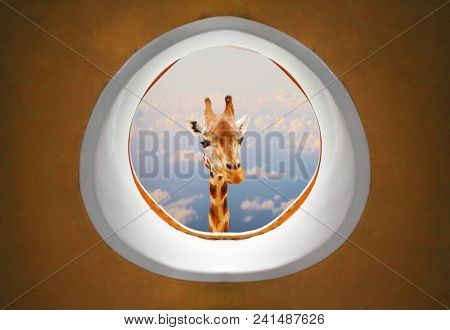 Long neck Giraffe looking trough airliner window. A crazy flight over Africa. Travel with fun.