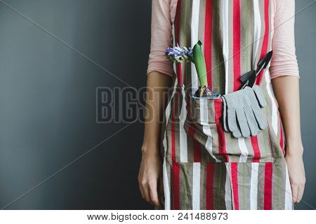 Woman Stands In Striped Apron With Hyacinth Plant And Small Metal Shovel On Gray Wall Background Wit