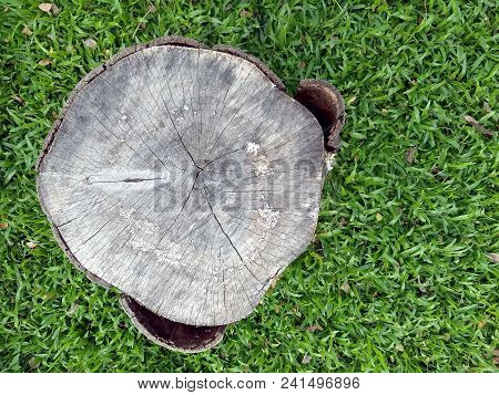 Old Stump On Fresh Green Grass Field, Tree Stump Chair Used For Outdoor Garden Furniture, Close-up T