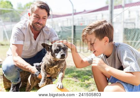 Dad and his son taking care of abandoned dog in animal shelter playing with him