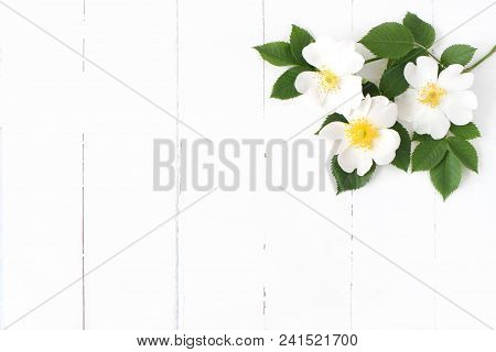 Styled Stock Photo. Feminine Floral Table Composition With Wild Rose Flowers On Old White Wooden Bac