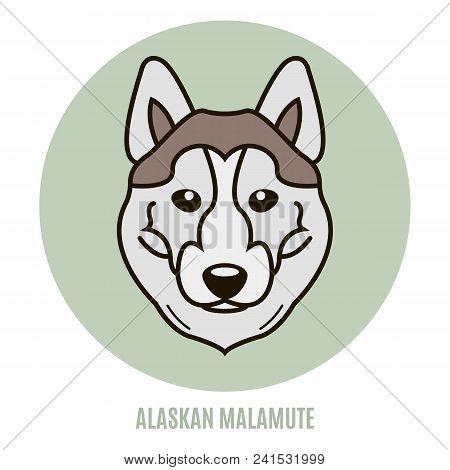Portrait Of Alaskan Malamute. Vector Illustration In Style Of Flat