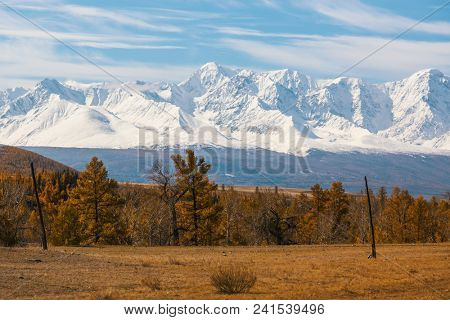 View of yellow autumn forest and mountain North-Chuya ridge of Altai Republic, Russia.