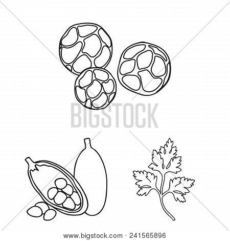 Herb And Spices Outline Icons In Set Collection For Design.different Kinds Of Seasonings Vector Symb