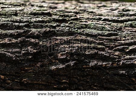 Embossed Texture Of Dark Brown Tree Bark With Green Moss And Lichen. Wooden Bark Pattern With White