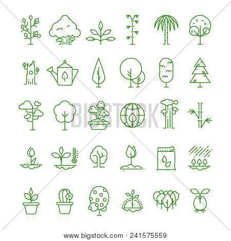 Plant, Planting, Seed And Trees Line Vector Icons. Sprout Growing Symbols. Nature Growing And Growth