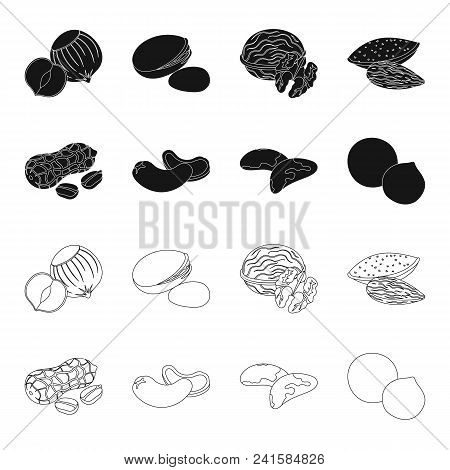 Peanuts, Cashews, Brazil Nuts, Macadamia.different Kinds Of Nuts Set Collection Icons In Black, Outl