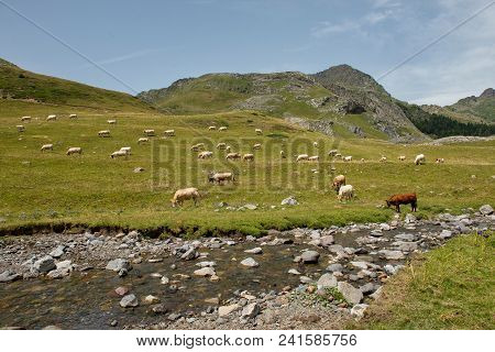 A Herd Of Cows In The Alpine Pastures