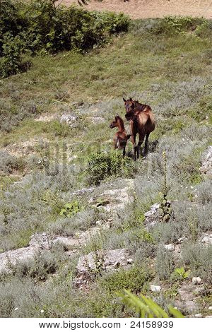 poster of Mother horse and hers son in the grass