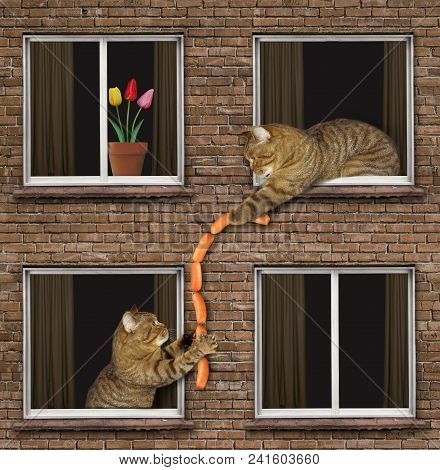 The Cat Passes The Bundle Of Sausages To His Neighbor Through The Window.